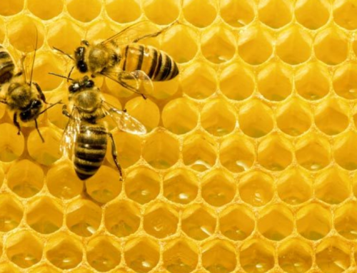 The Buzz Around Bee Decline: Are Super Robotic Bees the Future of Farming?